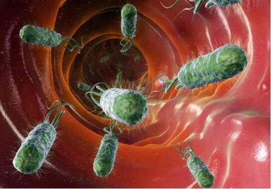 Cỏ Nhọ nồi có tác dụng tiêu diệt vi khuẩn E. Coli gây nhiễm trùng tiết niệu